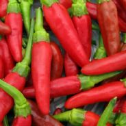 Hot Pepper Birds Eye Chilli - 30Seeds